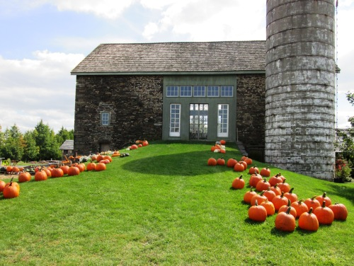 Pumpkins and Barn