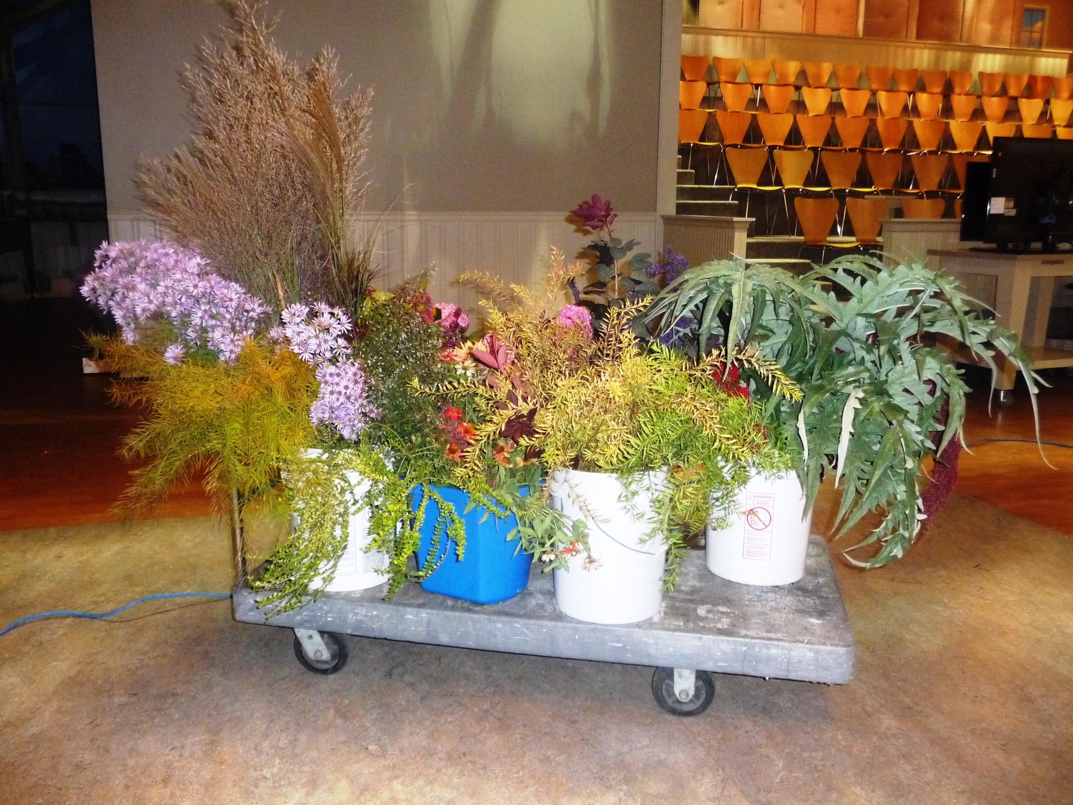 Cut flowers on set Linden Hill Gardens Jerry Fritz