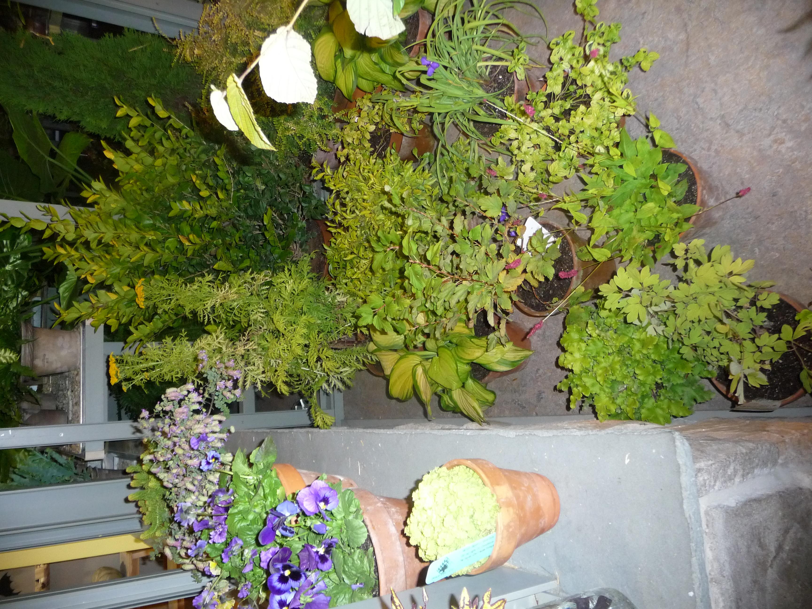 Sullivans Wholesale Home Decor Sullivans Wholesale Home Decor 28 Images Cotton 300