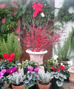 LHG holiday greenhouse