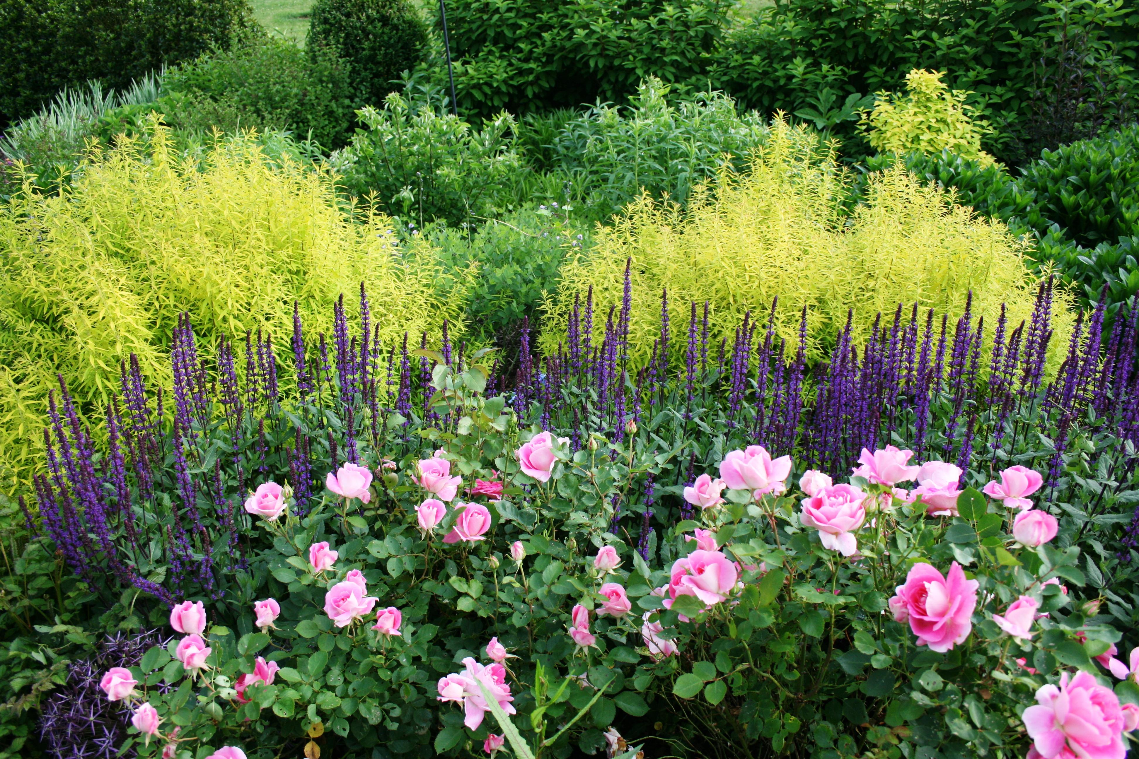 Roses In Garden: Linden Hill Gardens & Jerry