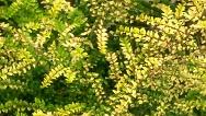 chartreuse_plants_1_horiz