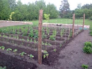 Planting Cutting Garden