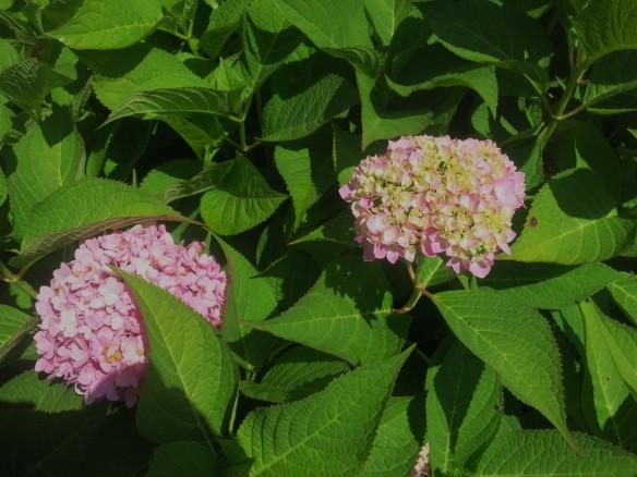 august in the garden 018
