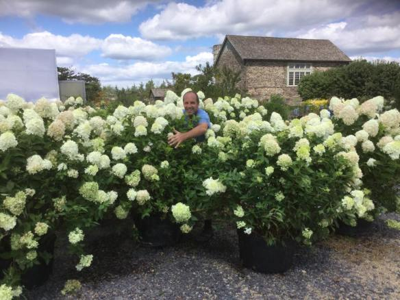 jerry and huge hydrangeas