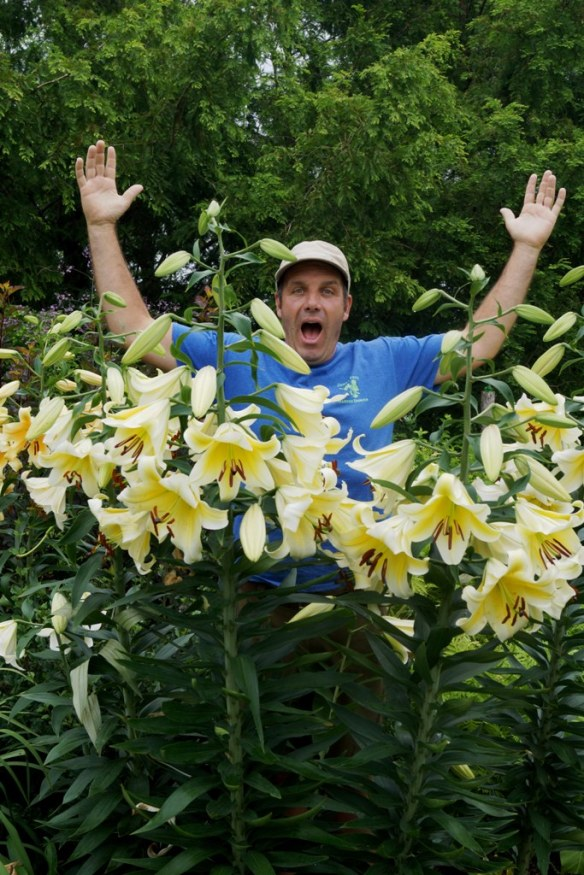 Jerry with Lilium Conca d'Or