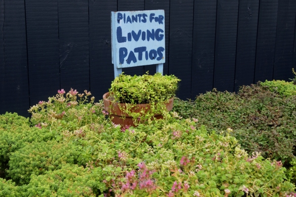 Plants for Living Patios at Linden Hill Gardens in Ottsville, PA